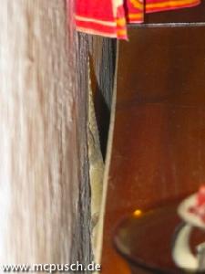 Gecko hinter dem Schrank.