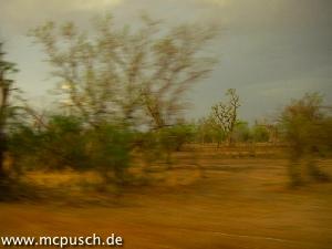 Vegetation am Strassenrand, Regenwolken.